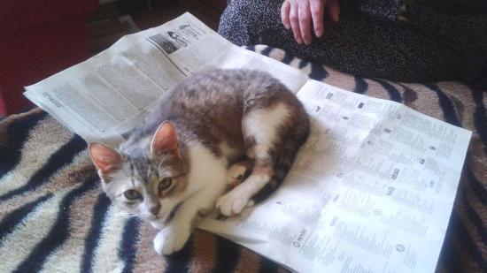 Macska-baj – ember-jaj!