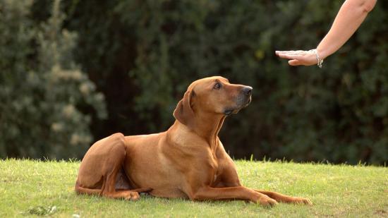 """Magyar kutatócsoport: a kutyák is képesek """"mentális időutazásra"""""""