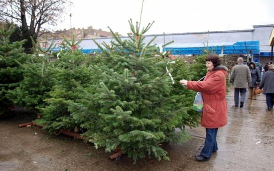 Néhány száz éve szokás a karácsonyfa-állítás