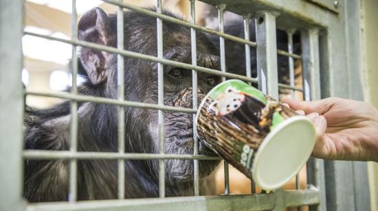 Állatkerti óvintézkedések