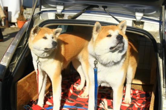 Ebidomok és fegyelmezett agyak a Dog Show 2017-en