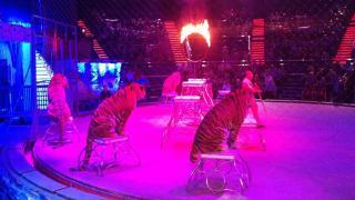 Globus cirkusz: nem lesznek többet állatok a műsorban