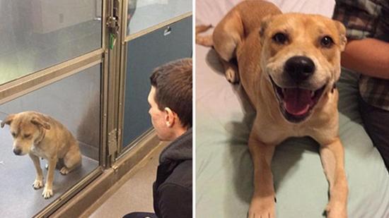 Örökbefogadásról a kutyák lelki világáért