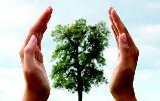 VIDEÓ - Környezetvédelem: nem csak faültetés