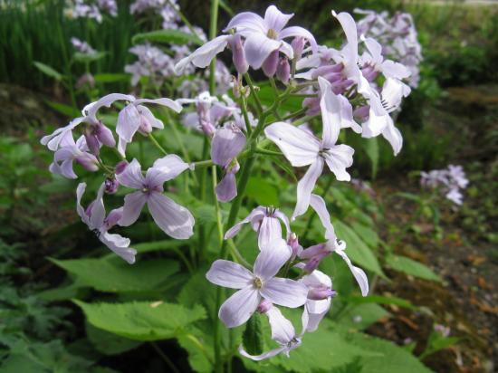 A herbáriumok tudományos és gyakorlati hasznáról
