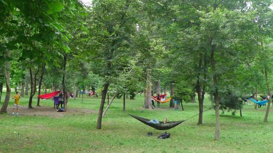 Tönkreteszik a sétatéri fák kérgeit