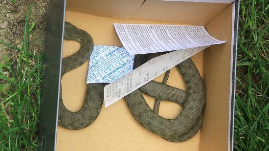 Kígyót fogtak ma a Nyárfasoron