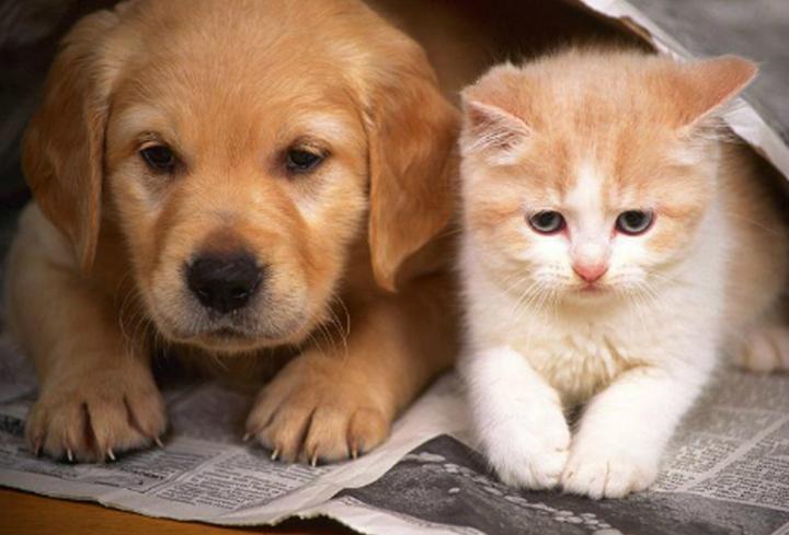 Kutya-macska ügyek