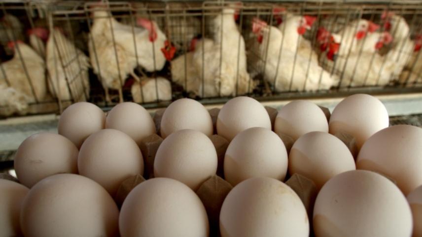 Romániában is találtak rovarirtóval szennyezett tojáskészítményt