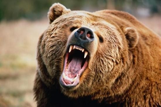 Mogyorószedő férfi a medvék legújabb székelyföldi áldozata