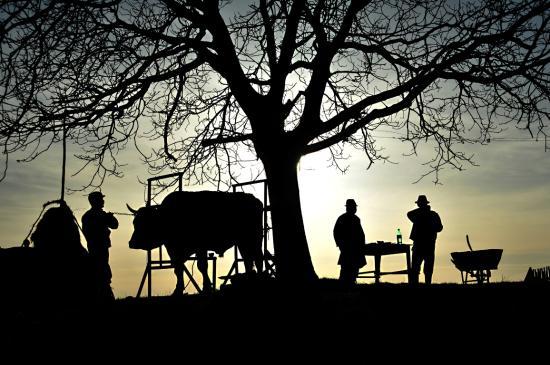 A vidéki élet szépségeit dokumentálnák