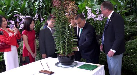 Orchideát neveztek el Orbán Viktorról