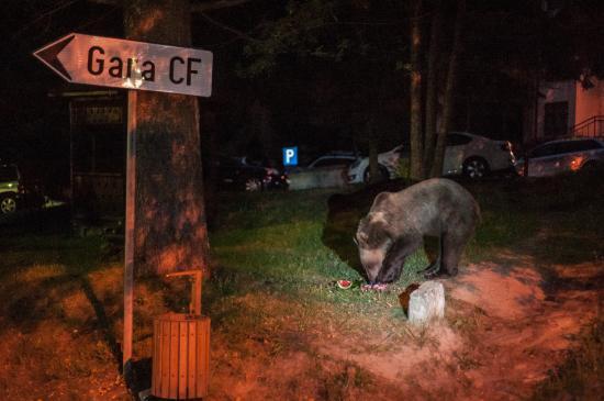 Szirénákkal üldözték el a csendőrök a medvéket Buşteni-ben