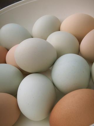 Ki árulja olcsóbban a hazai termelőktől származó tojást?