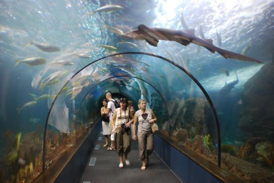 Állatkertet létesítenének a Hója erdő közelében
