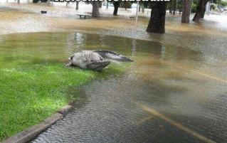 Az utcán talált krokodilt fogtak be karácsonykor Melbourne-ben