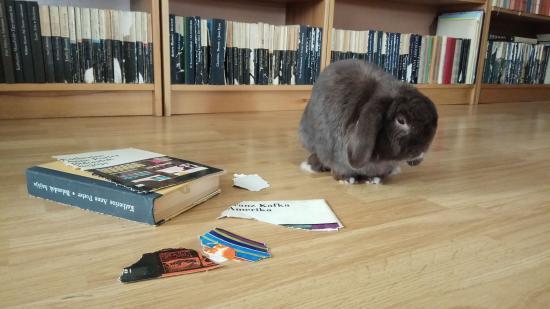 Borisz, a könyvtáros