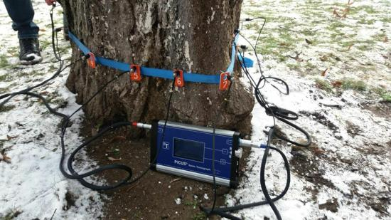 Kolozsvár: 130 ezer lejes tomográf a fák egészségi állapotának felmérésére
