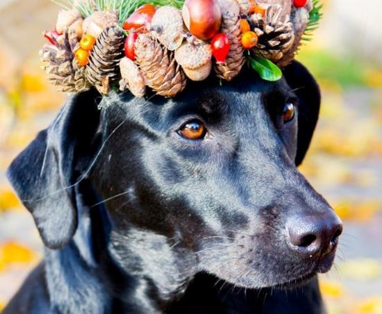Őszi kutyaportrék, hogy mosolyogjunk