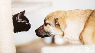 Petsonality: mert az állatoknak is van személyiségük