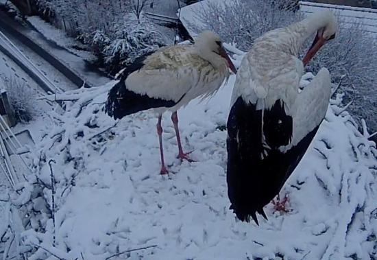 Próbára teszi a korán érkezett gólyákat a télies időjárás