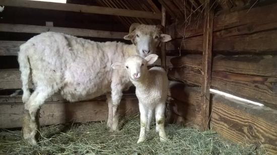 Húsvéti bárány
