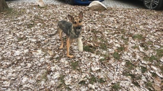 Megmentették a sánta kutyát
