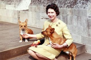 A brit uralkodó utolsó corgi kutyája is elpusztult