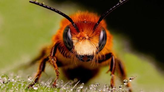 Halálra csíptek a méhek két embert