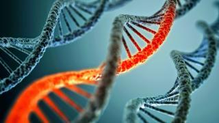 Genetikai forgótárcsa
