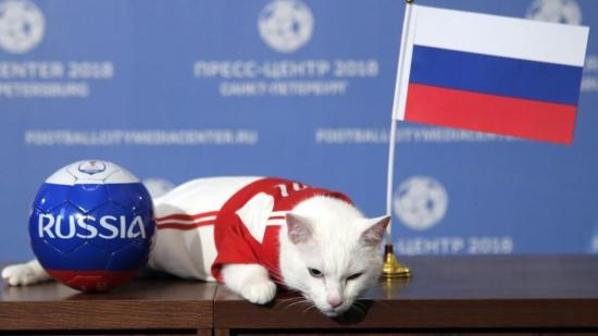 """Egy futballcsapatnyi állat """"jósolja"""" a meccsek eredményét Oroszországban"""