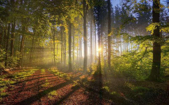 Újra állami birtokba kerültek Bánffy Dániel egykori erdői