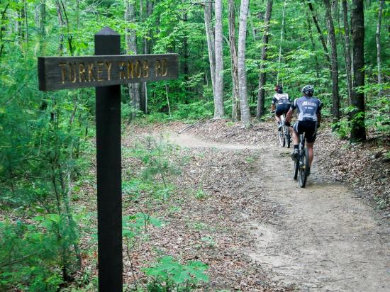 Erdei biciklizésre alkalmas nyomvonalak a Kolozsvár körüli erdőkben