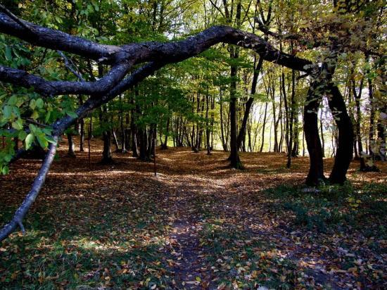 Állást foglalt az RMDSZ a Bánffy-erdő visszaállamosítása ügyében