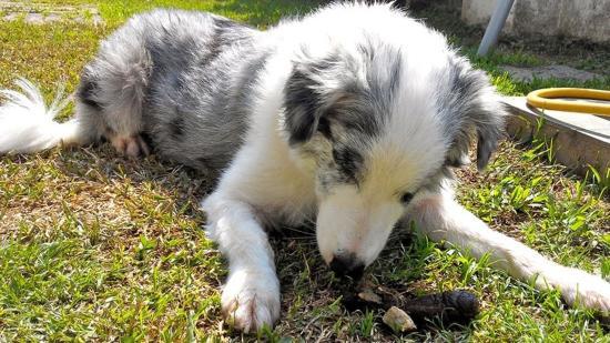 X-akták: a kutyagumi