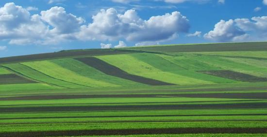 Több termőföldet vásároltak gazdálkodók és külföldi spekulánsok