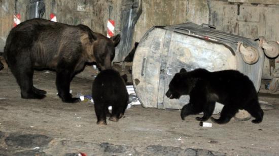 Csíkszereda: iskola udvarára hatolt be a medve