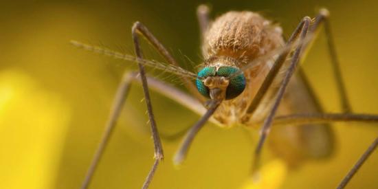 Nyugat nílusi vírus: 17 haláleset, 166 agyhártyagyulladás