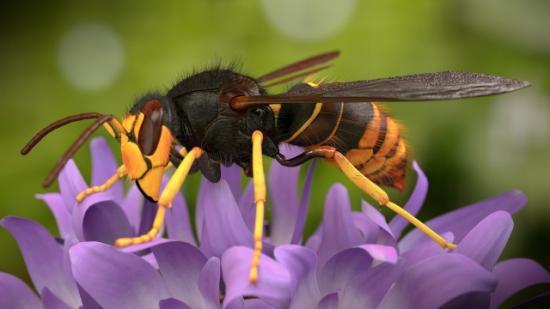 Habár egyformán hasznosak, a darazsakat sokan utálják, de szeretik a méheket