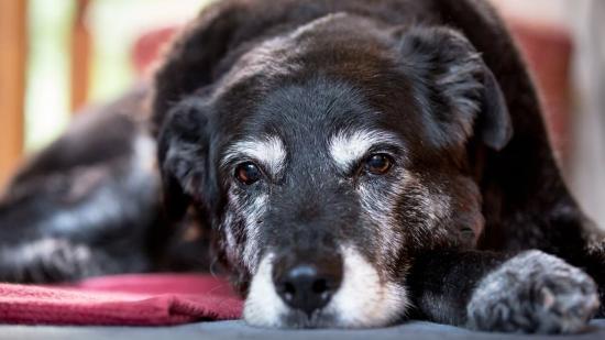 Öreg kutya van a háznál (1.)