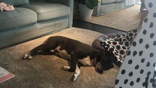 Kóbor kutyáknak ad téli menedéket egy olaszországi IKEA