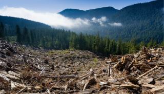 Romsilva: az év eleje óta több mint 20 ezer köbméter fát vágtak ki illegálisan