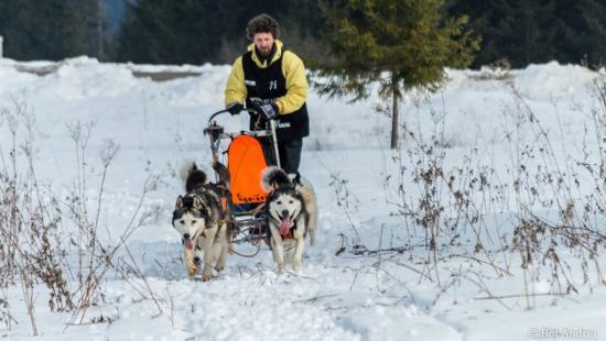 Nemzetközi kutyaszánhúzó verseny Borszéken