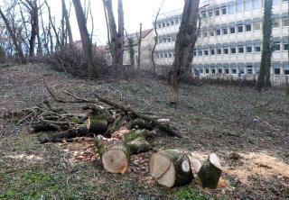 Brutális fakivágás a Mikó-kertben