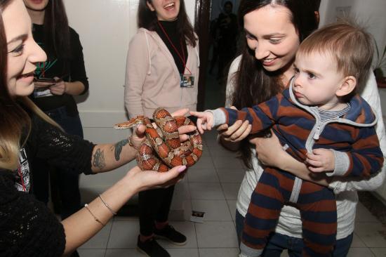 VIDEÓ- és FOTÓRIPORT - Kígyókkal, kutyákkal, madarakkal kerültek kapcsolatba a gyerekek és a felnőttek