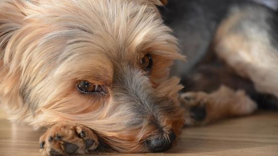 A kutyák különös parazitái