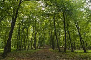 Aláírásgyűjtés a Hója erdő megmentésére