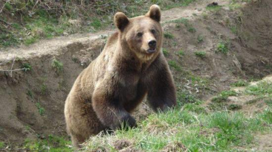 Kukába szorult medvebocsot szabadítottak ki a csendőrök Tusnádfürdőn