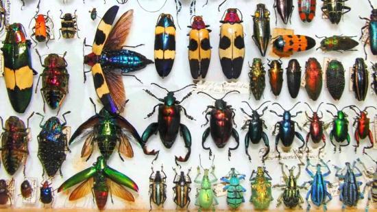 Kulturális rovarok