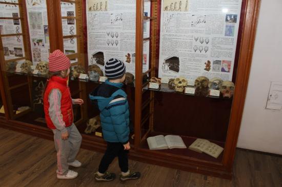 Emberelődök az Állattani Múzeumban